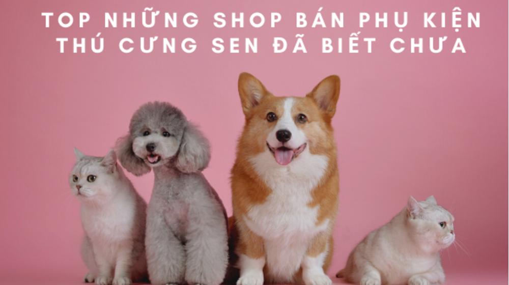 TOP những shop bán phụ kiện thú cưng Sen đã biết chưa